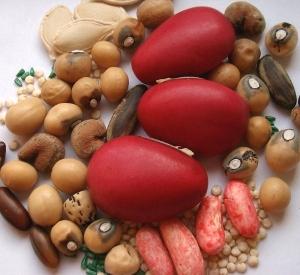Moestuin zaadjes